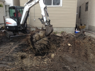 Large Stump Removal
