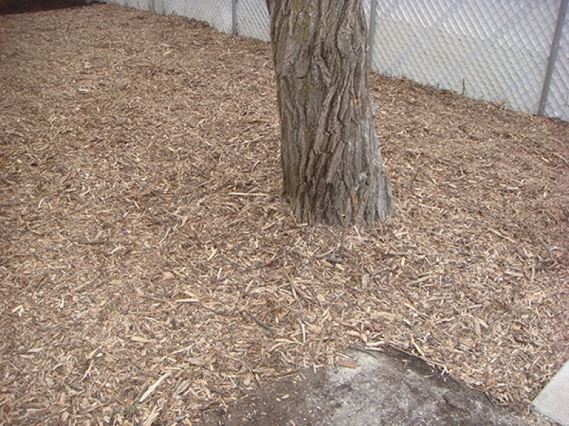 Natural wood mulch around base of tree